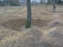 Versetzen Bäume